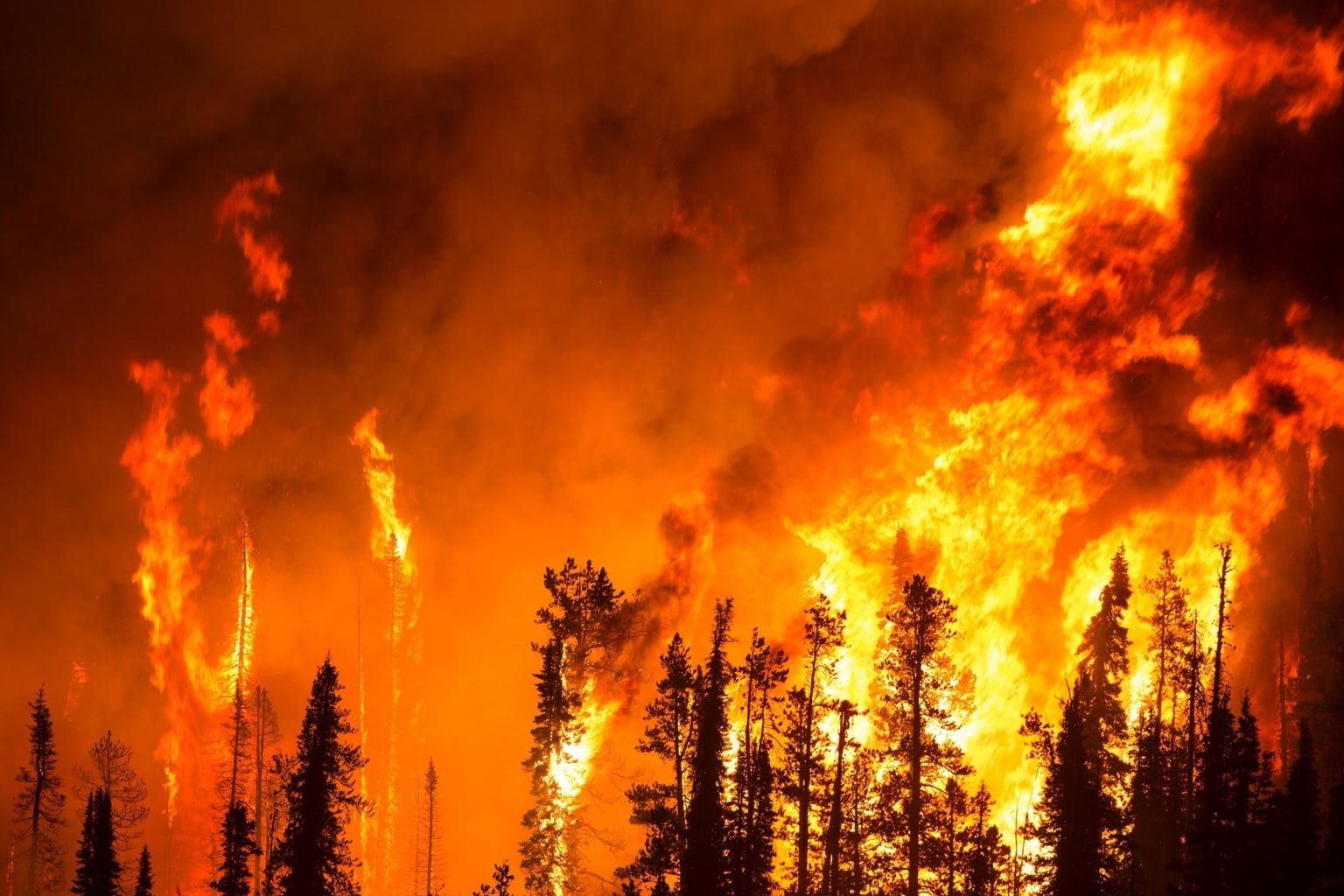 How likely are you to be affected by a natural disaster in the United States, such as a wild fire?