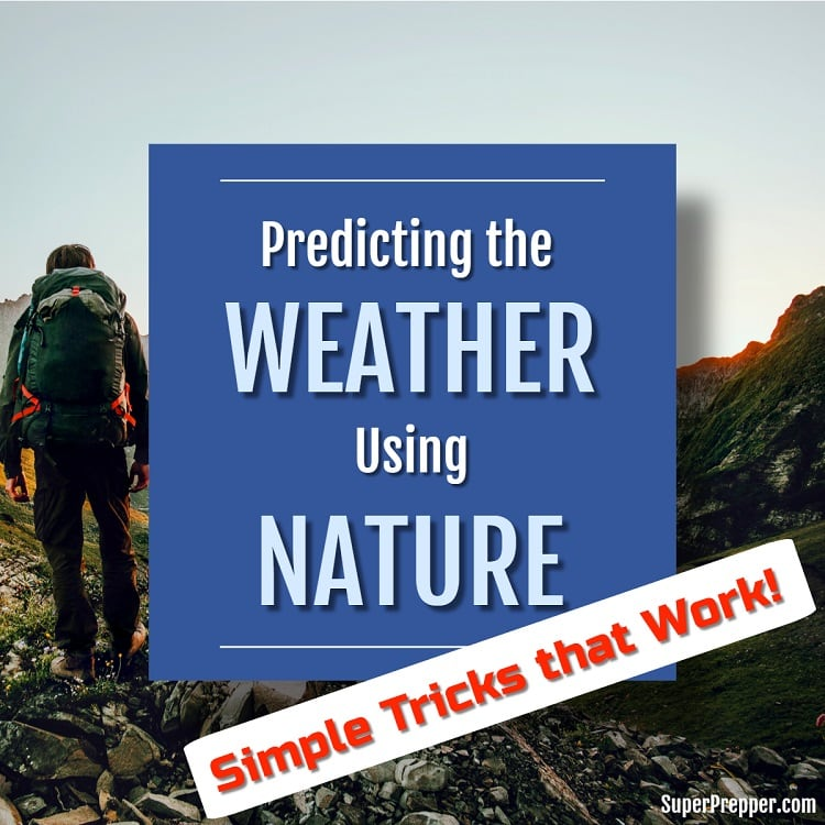 Predicting the Weather Using Only Nature