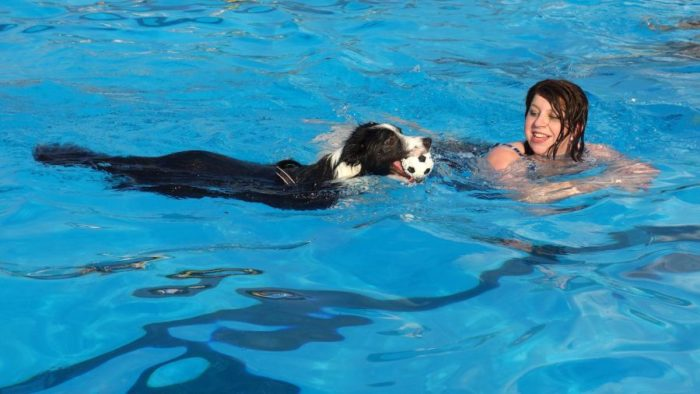 Animals spread pathogens through pool water.