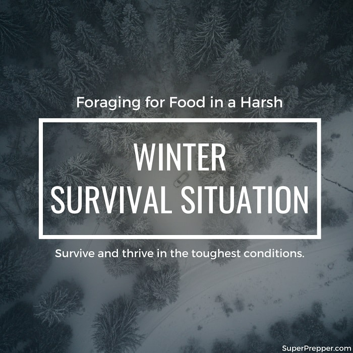 Winter Foraging in a Survival Situation